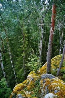 Kyöpelinvuori/ Witches' Mountain.Photo Otso Ovaskainen/ Luonnonperintösäätiö